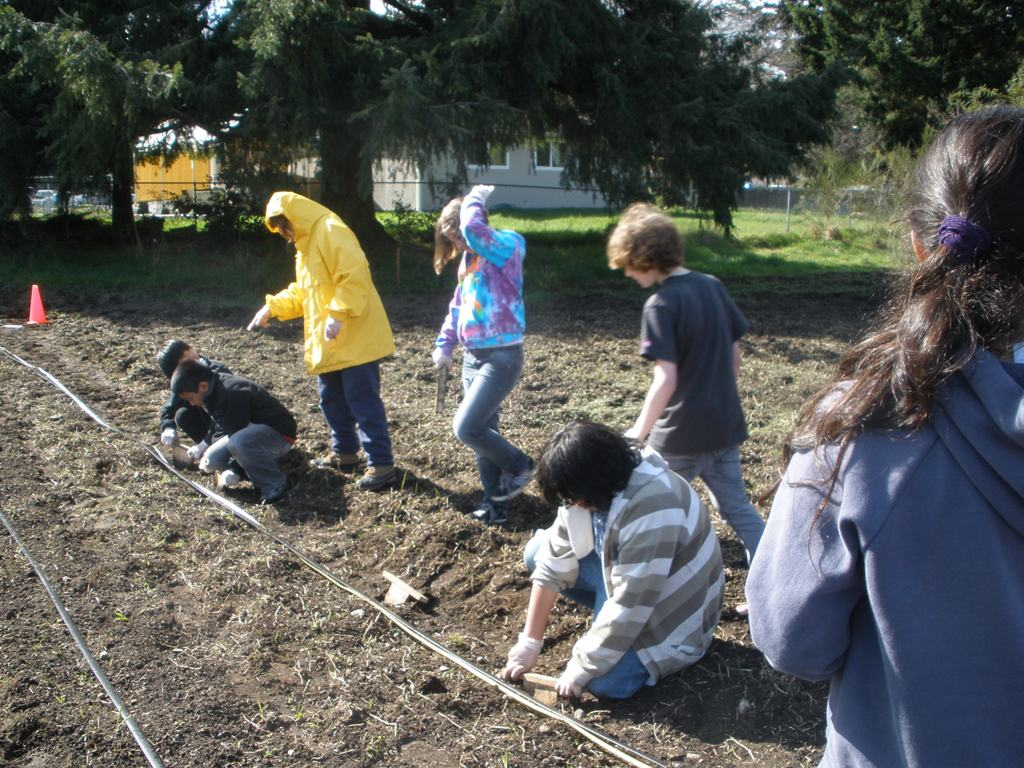 Mt. View Elementary kids planting potatoes