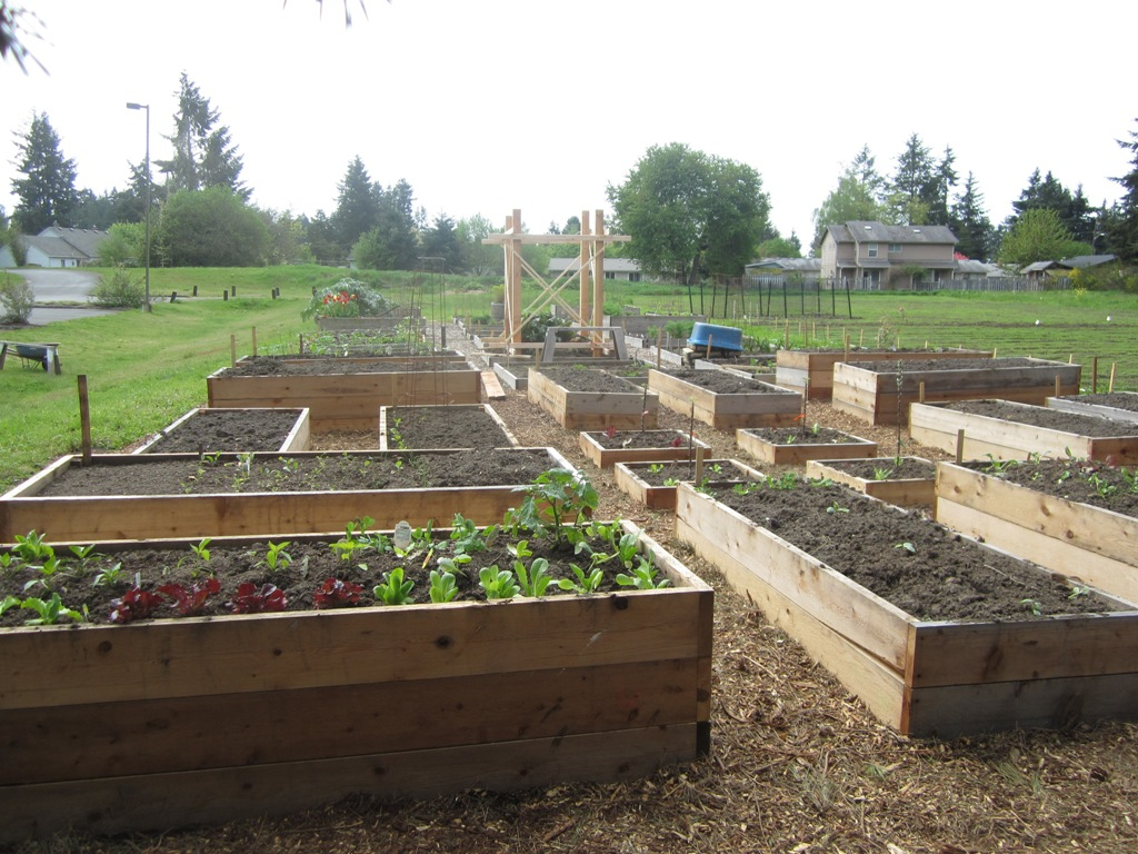 Community Garden News The New Raised Beds Are Raised