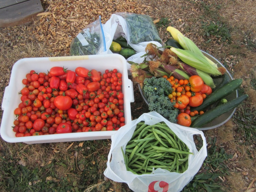 Produce for the Food Bank from September 19th gleaning